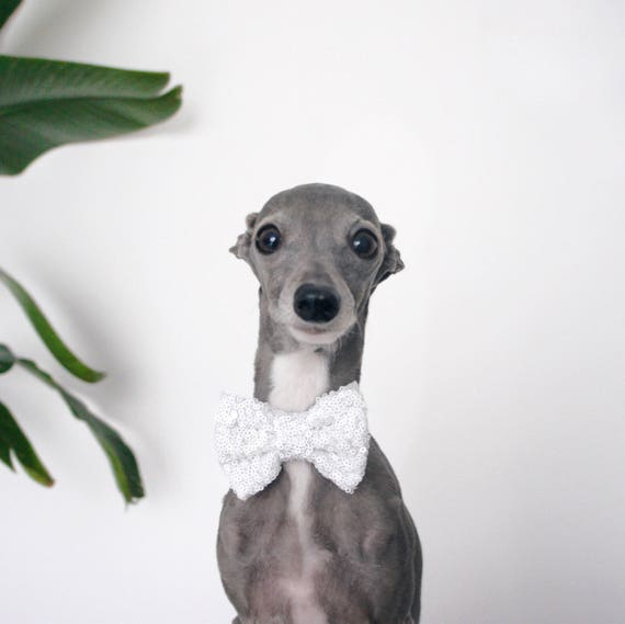 Bow Tie for a Dog || Dog Neck Tie || Cat Neck Tie || Bowtie for Kitty || Pet Bow Tie || Cat Costume