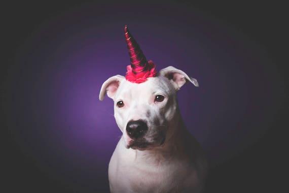 NEW! Unicorn Headband for Dog || Pet Unicorn Costume || Dog Unicorn || Unicorn Dog