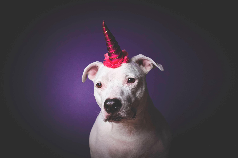 NEW Unicorn Headband for Dog Pet Unicorn Costume Dog  7ac0fca64e3