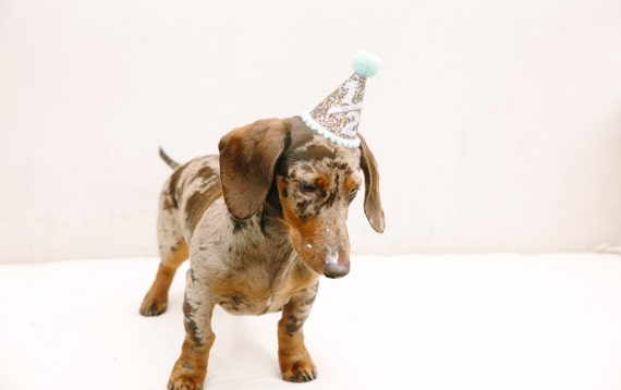 Dog Party Hat || Half Birthday Party Hat || Animal Hat || Dog Crown || Pet Birthday || Busters Party Shop || Confetti + Mint