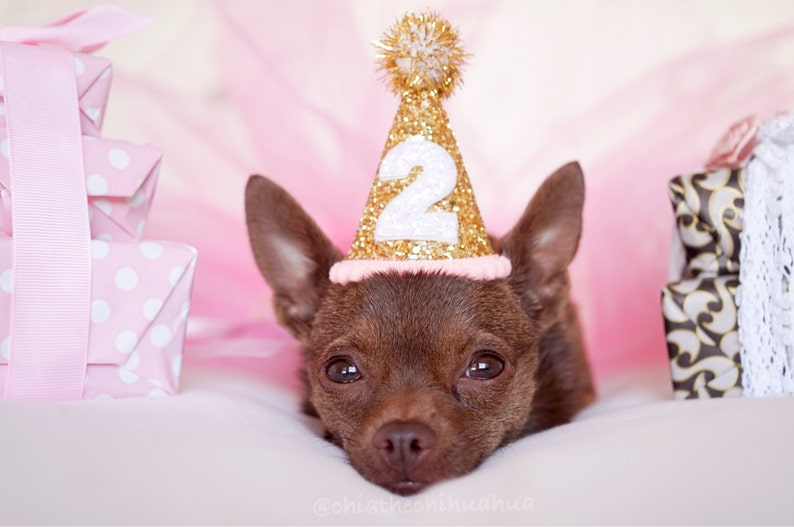 Dog Party Hat  Dog Birthday Hat  Dog Birthday Party Outfit image 0
