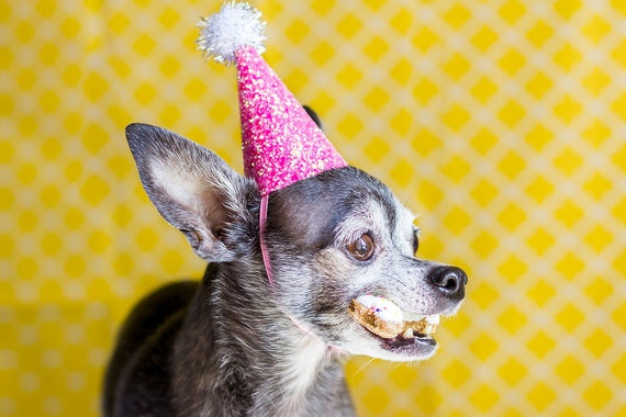 Dog Birthday Party || Cat Party Hat ||  Cat Birthday Hat || Animal Crown || Busters Party Shop