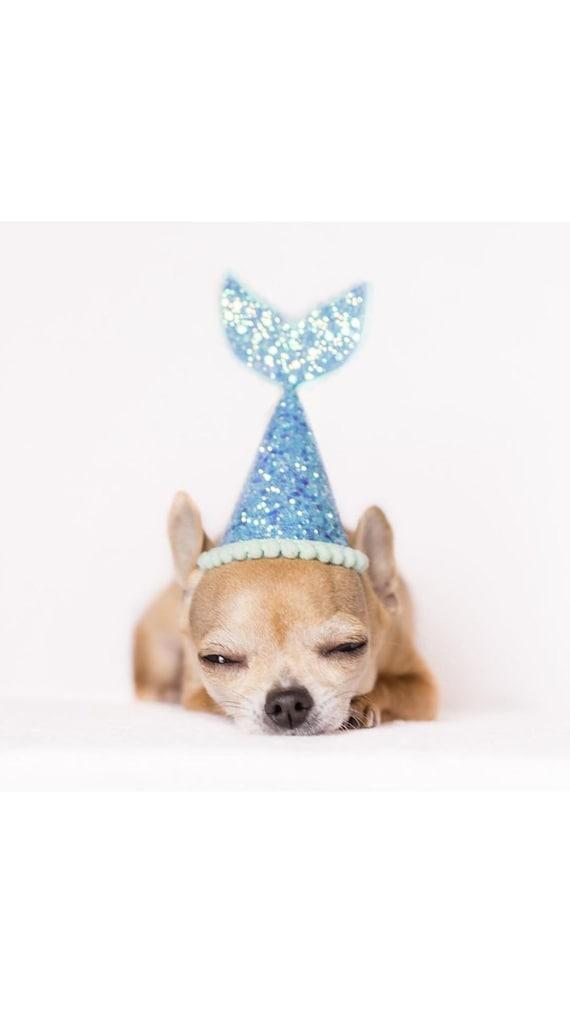 Dog Birthday    Dog Party Hat    Dog Birthday Party Hat    Pet Party Decor    Animal Party Hat    Dog Gift    Dog Clothes