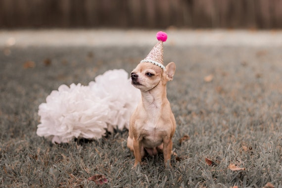 Dog Birthday Hats || Animal Hat || Dog Crown || Busters Party Shop || Cat Birthday Crown || Pale Gold + Fuschia + Mint