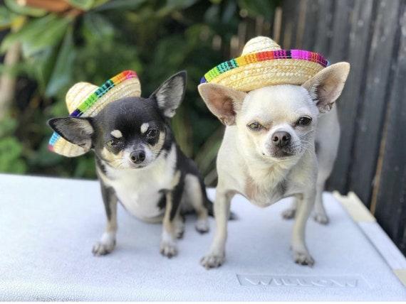 Mini Pet Dogs Straw Hat Sombrero Cat Sun Hat Beach Party Straw Hats Dogs Hat