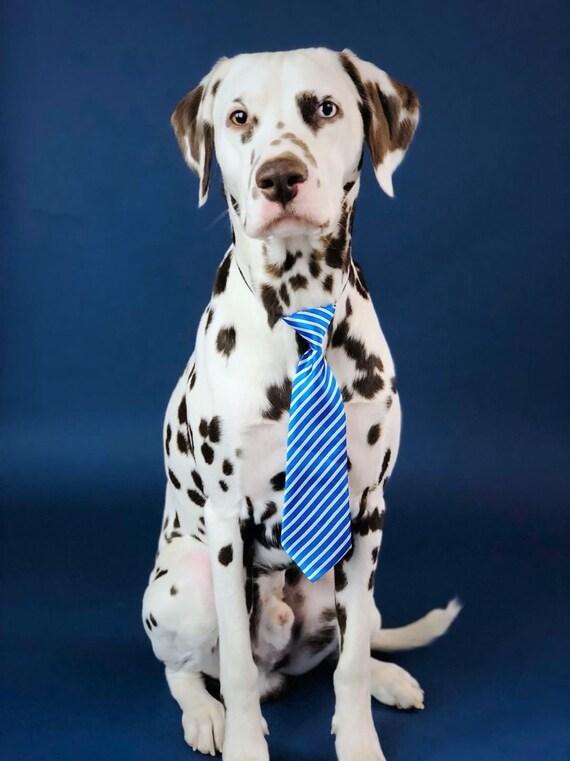 Dog Neck Tie || Neck Tie || Dog Tie || formal Dog Costume || Striped Blue Tie