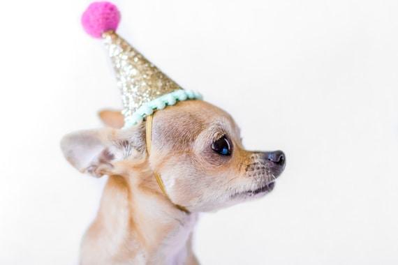 Dog Birthday || Dog Costume || Dog Birthday Hat || Dog Party Hat || Dog Birthday Party || Dog Clothes || Dog Crown