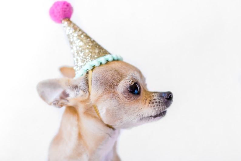 verjaardag hond kostuum hond hond verjaardag hoed | etsy