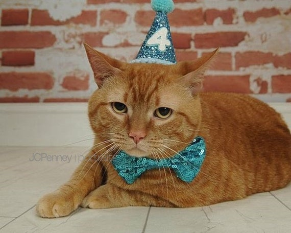 Cat Birthday Hat And Large Bow Tie Dog Gift Pet Birthday Etsy