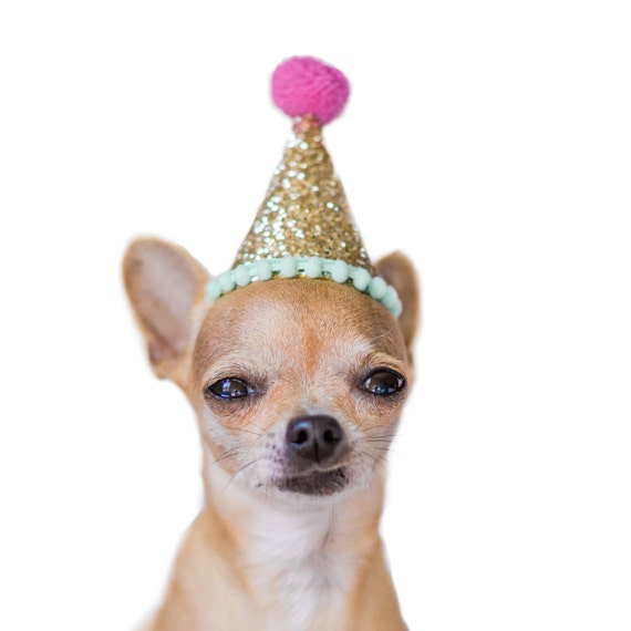 Dog Birthday Party Hat Costume