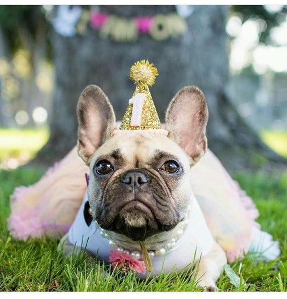 Dog Costume    Dog Clothes    Dog Birthday    Dog Party Hat