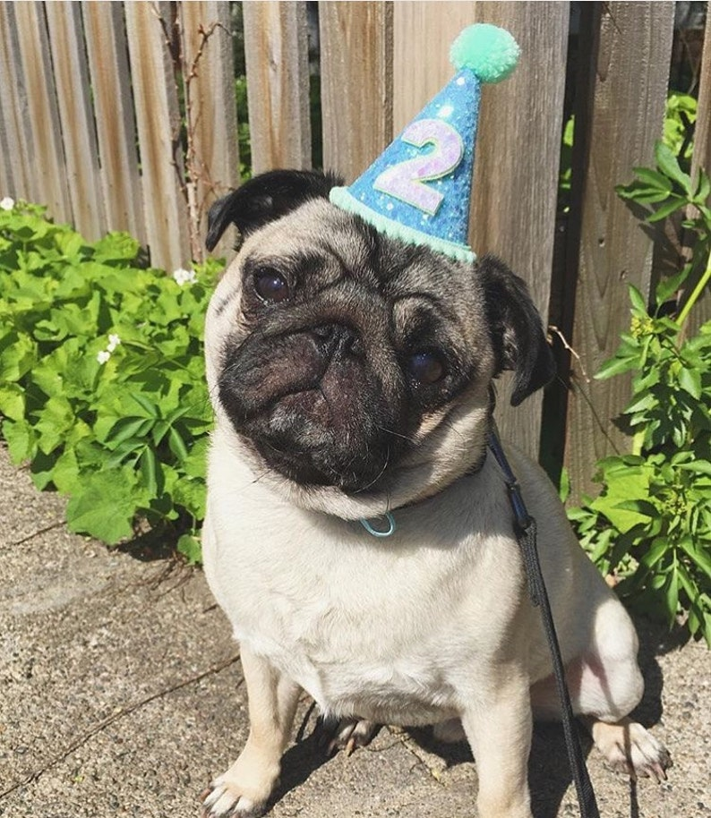119a94d2147 Dog Party Hat Dog Hat Animal Hat Birthday Hat Pet