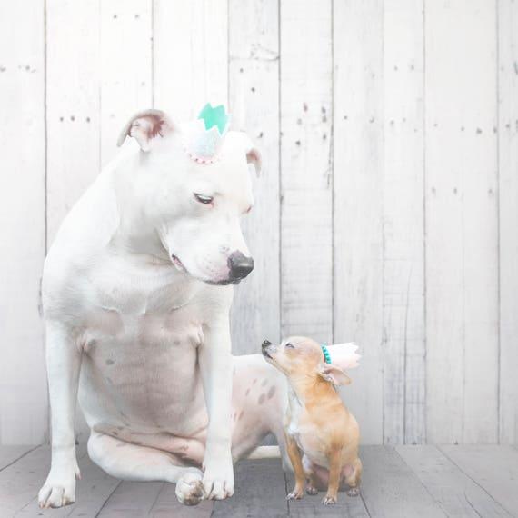 Pet Birthday Hat || Animal Birthday Hat || Dog Party Hat || Dog Crown || Dog Birthday Crown || Pet Party Hat