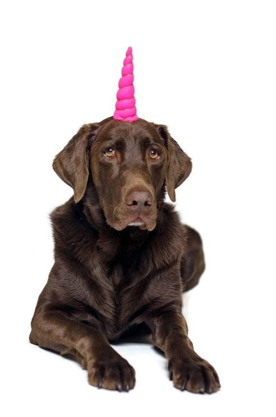 Dog Birthday Hat || Dog Unicorn Headband || Unicorn Headband for Dog || Pet Unicorn Costume || Dog Unicorn || Unicorn Dog