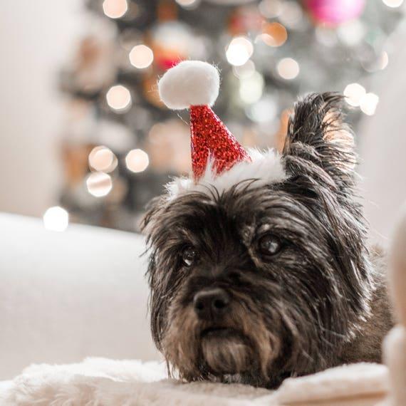 Christmas Puppy Hat || Santa Claus || Santa Hat || December Birthday || Glitter Red Santa Fur