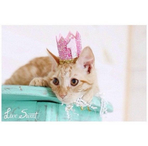 Cat Crown || Cat Hat || Kitty Cat Birthday Crown || Animal Crown || Animal Party || Pet Birthday Party Outfit || Cat Costume || Cat Toys