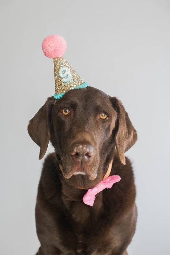 Birthday for Dogs Dog Birthday Hat Pet Birthday Crown Royal Dog Birthday Dog Crown Pet Birthday Party Hat Dog Lover Gift