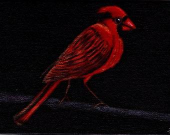 Northern cardinal by Lauren Bridgstock