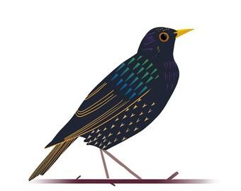 Starling- British Birds Illustration A3  giclee Art Print- *LIMITED*