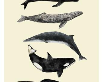 Whale Print, Nautical Print, Animal Print, Whale Illustration, Whale Drawing, Nautical Art