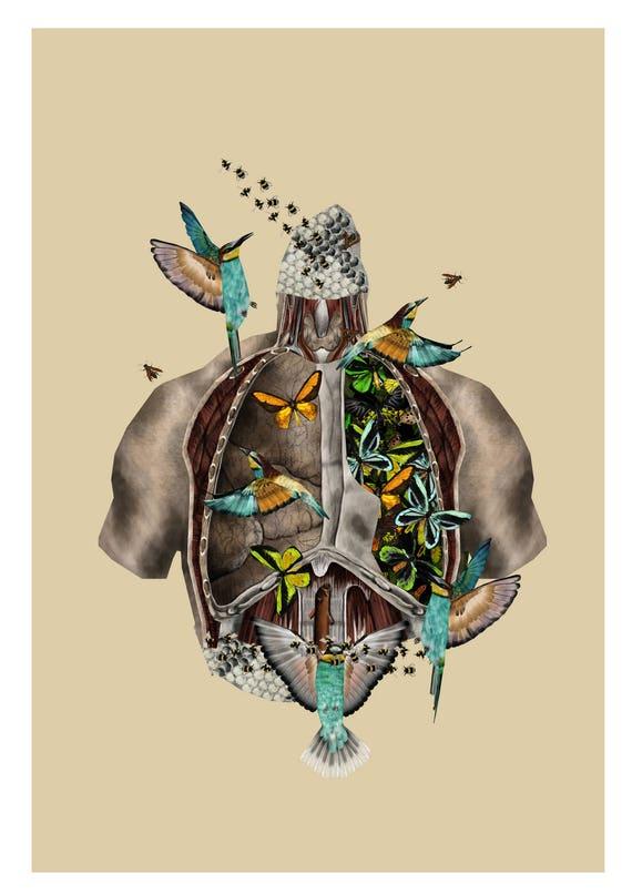 A4 Anatomische Illustration anatomische Druck anatomische | Etsy