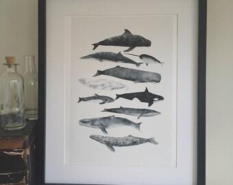Whale print, Whale Illustration, Nautical Print, Nautical Illustration, Nursery Decor, Sea Life, Childrens Decor, Home Decor, Nautical Art,