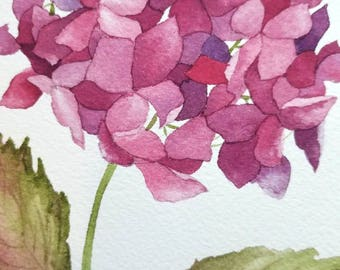 Framed hydrangea watercolor painting/ pink Hydrangea, original painting, watercolor painting, original art, pink flower painting