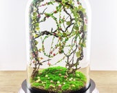 Artificial Plant Forest Terrarium, Curiosity Cabinet, Glass Bell Dome, Wedding Anniversary Gift, Christmas Decoration