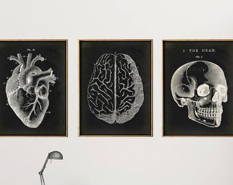 Anatomy Print SET of 3, Anatomical Poster on black, Skull Print, Heart Print, Brain Chart, Medical Print, Anatomy Chart, Antique Anatomy