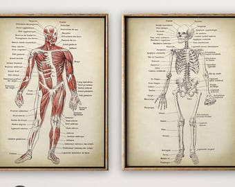 anatomy print set of 2, anatomical poster, muscles and skeleton, chart,  medical print, anatomy chart, antique anatomy