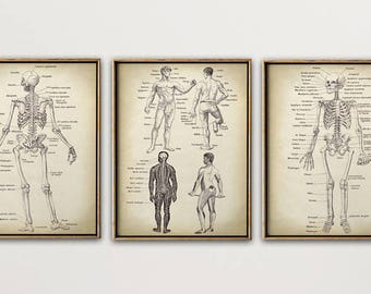 Anatomy Print SET of 3, Anatomical Poster, Skelton Chart, Human Body Forms, Medical Print, Anatomy Chart, Antique Anatomy