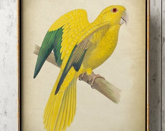 YELLOW PARROT Print, Tropical Parrot Poster, Exotic Bird Print, Parrot Illustration, Wall Art.