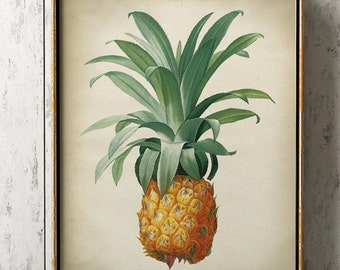 Pineapple botanical print, Pineapple poster, tropical fruit, Pineapple print, Pineapple art decor, botanical art, botanical print