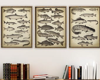 FISH PRINT SET  3, Fishes Set Poster, Fish Poster, Coastal Wall Decor, Sea life Art, Marine Prints