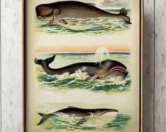 Aged WHALE Poster, Whale Print, Marine Decor, Nautical Art, Seal Life, Marine Life Print, Beach Home, Coastal theme, unframed wall art