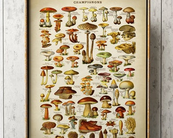 SCIENCE MYCOLOGY MUSHROOM FUNGUS TOADSTOOL CHART Poster Biology Canvas art