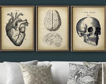 Anatomy Print SET of 3, Anatomical Poster, Skull Print, Heart Print, Brain Print, Cranium, Medical Print, Anatomy Chart, Vintage Anatomy