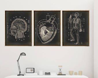 Anatomy Print SET of 3, Anatomical Poster, Heart, Brain, Skeleton Chart, Medical Print, Anatomy Chart, Antique Anatomy