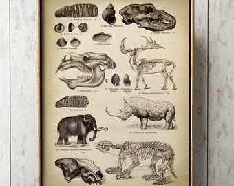 Prehistoric Animal Poster, Dinosaur Skeleton, Primitive animals, Antediluvian Fossils, Old World, Paleontology Science poster