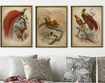 TROPICAL BIRD Print SET of 3, Exotic Birds Poster, Red Birds Illustration, Poultry Home Decor, Fowl Wall Art, Bird Art