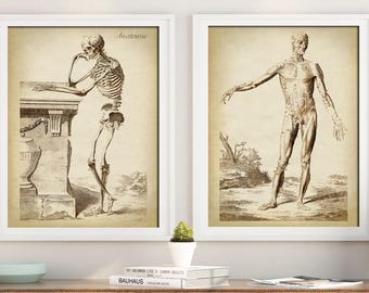 ANATOMY Print SET of 2, Anatomical Poster, Classical anatomy illustartion, Human Skeleton, Medical Print, Anatomy Chart, Antique Anatomy