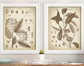 BOTANICAL Print SET of 2, Flower Poster, Flowers Print, Antique Botanical Posters, Botanical Wall Decor, Elegant Black and White Botany Art
