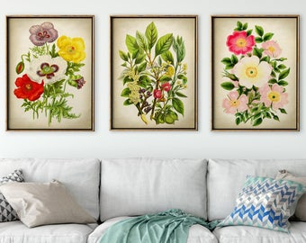 BOTANICAL Print SET of 3, Opium Poppy, Roses, Wild Flowers Print, Botanical Poster, Botanical Illustration, Vintage Botanical Art, Nature