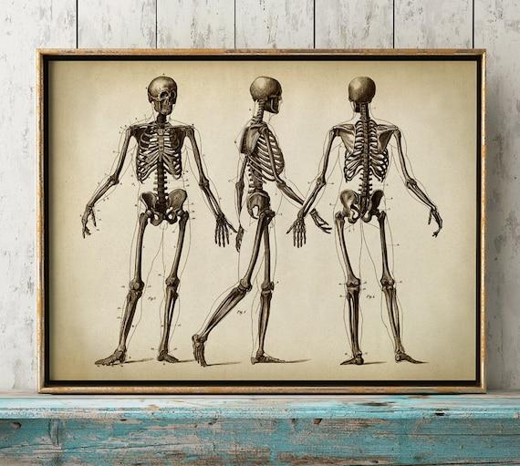 Anatomie zu drucken Anatomie Poster menschliche Skelett   Etsy
