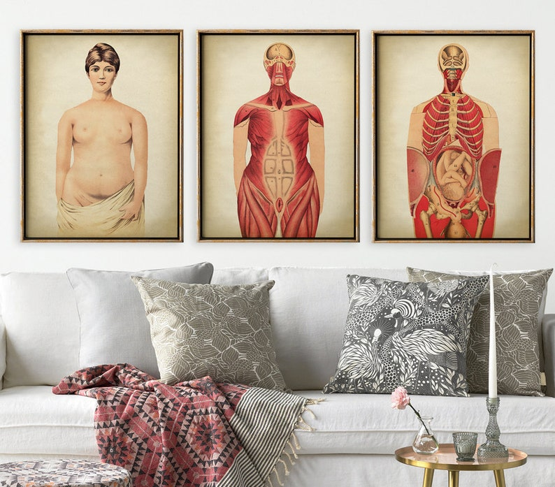 Pregnant Woman Anatomy Print Set Of 3 Mom Anatomical Poster Etsy