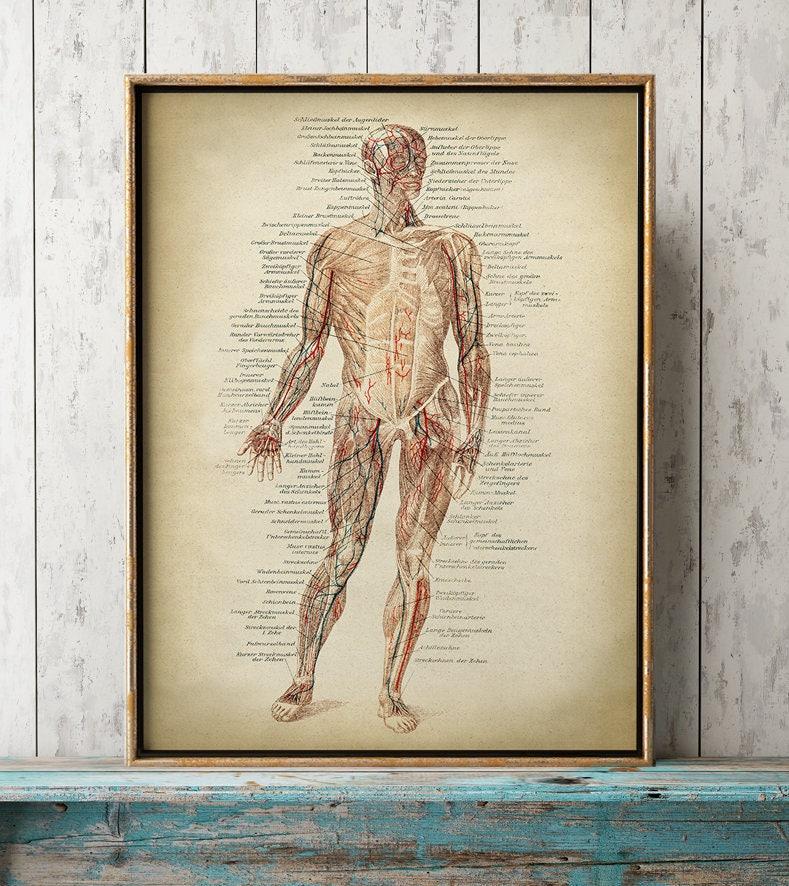 Anatomie-Druck Anatomie Poster Muskeln Druck menschliche | Etsy
