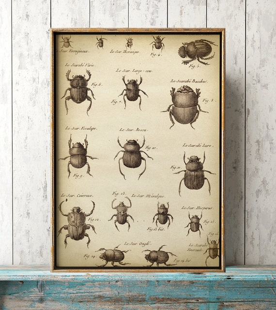 Großes Käfer Poster, Käfer Plakat A3, Käfer-Wand-Dekor, wissenschaftlichen Studie, antike Käfer, im Alter von schwarzen und weißen print