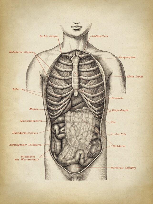 Anatomie-Druck männliche Brust Anatomie Poster menschlichen | Etsy