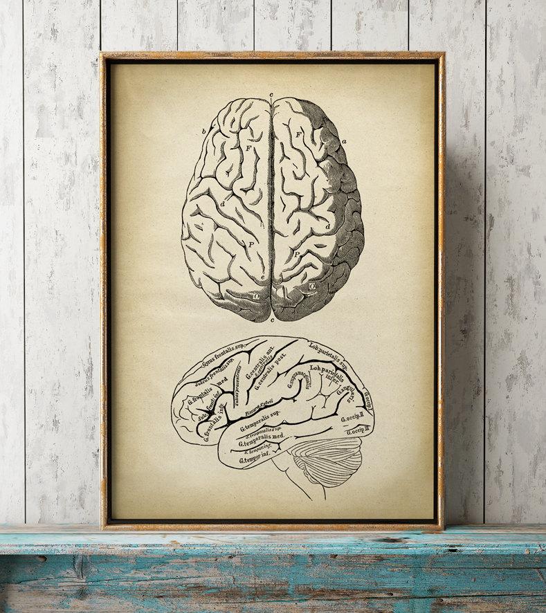 Anatomy print anatomical drawing brain print aged anatomy   Etsy
