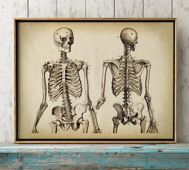 Anatomie Druck Anatomie Poster menschliche Skelett Druck   Etsy